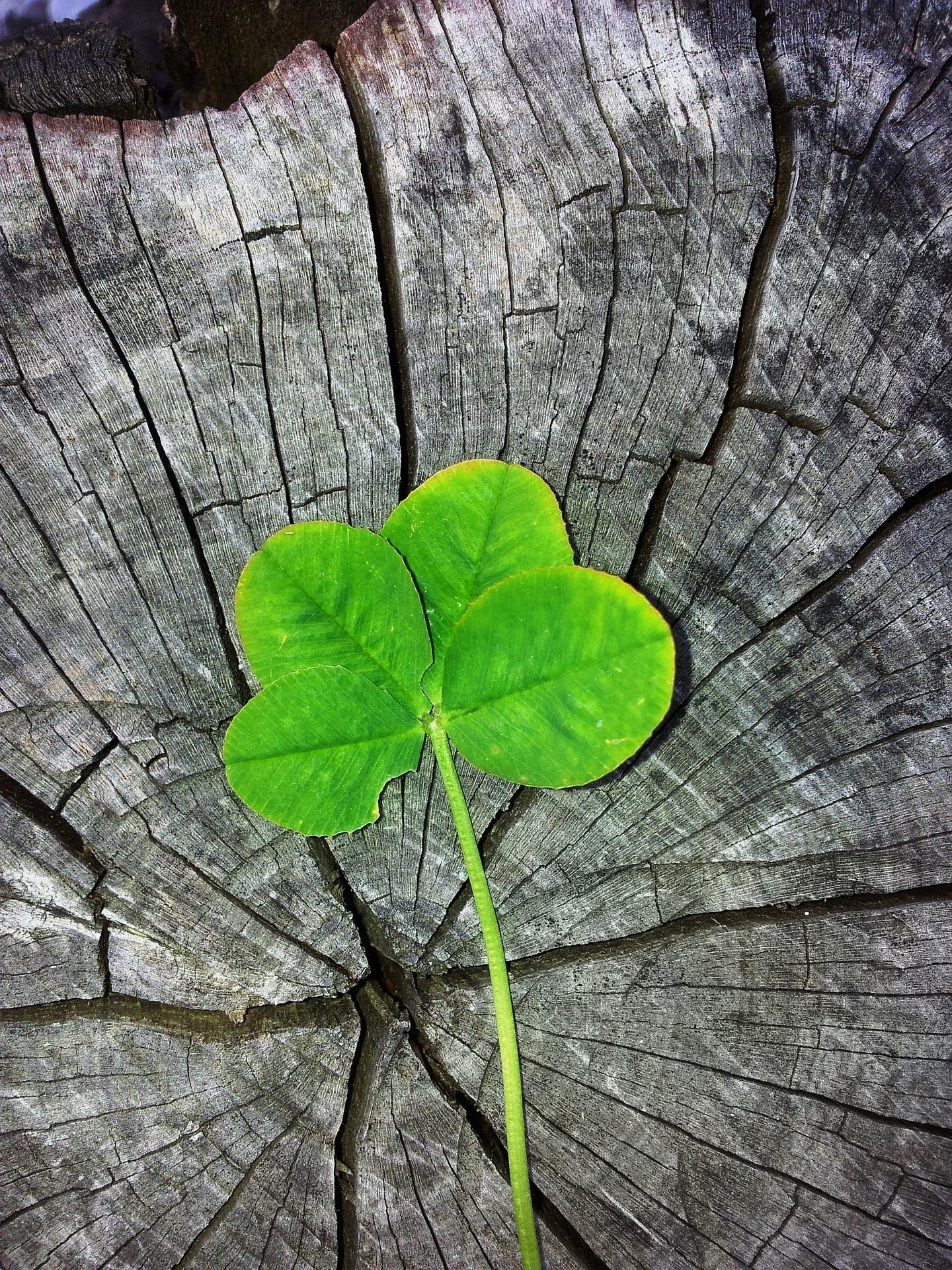 four-leaf-clover-978544_1920